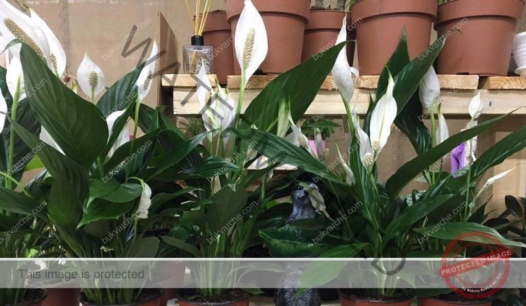 Задължителни растения за дома, които привличат просперитета