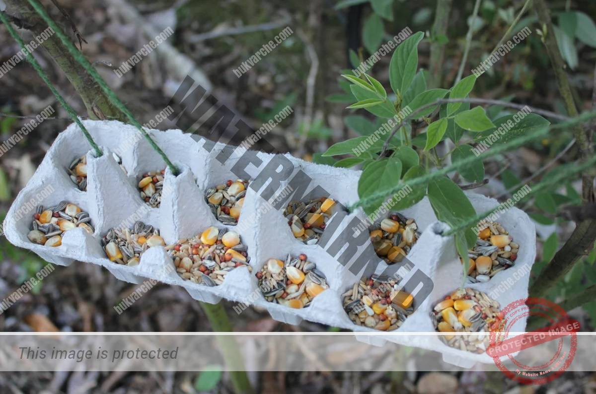 Засяване на семена в кори от яйца - удобен и ефективен начин