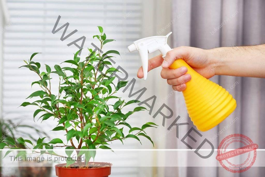 Домашен сапун в градината - грижа за растенията