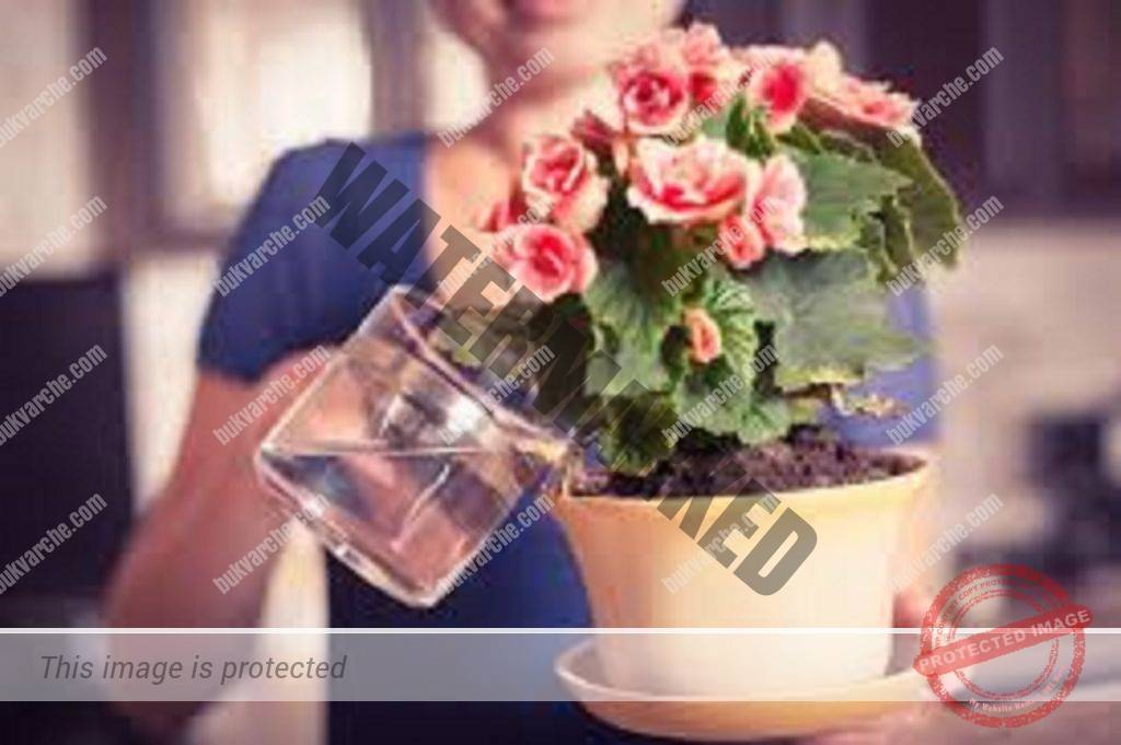 Тор за стайни растения - не боледуват и цъфтят невероятно!