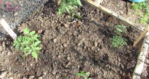 Елиминирайте вредителите в градината с тези трикове!