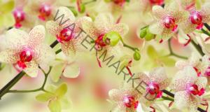 Защо орхидеята пожълтява и как да я спасите?