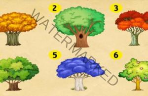Какво ви носи бъдещето? Изберете дърво и разберете!