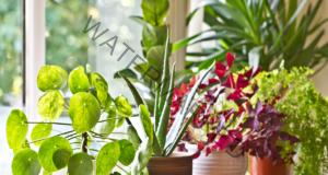 Мушиците по стайните растения могат да бъдат елиминирани лесно
