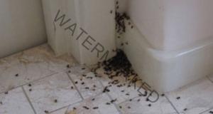 Средство срещу мравки, което ще ги прогони веднага