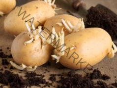 За лечение на артрит и болки - тинктура от картофени кълнове