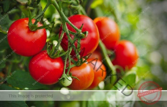Органични торове за домати за богата и здрава реколта