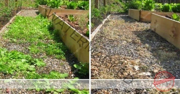 Домашно средство срещу плевели за чиста градина и пътеки