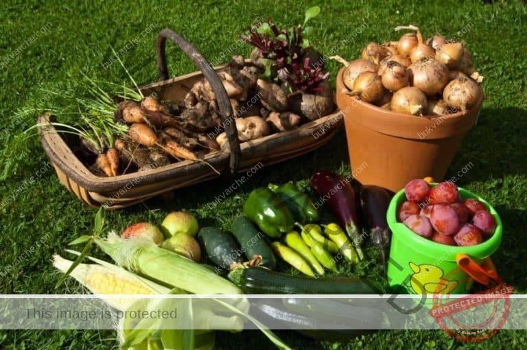 Разтвор с бял оцет в градината - полезни съвети