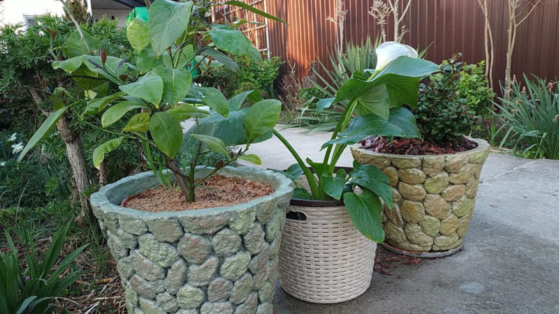 Кашпи за градината - ето как можете да си направите сами