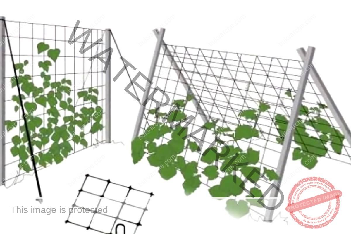 Практично отглеждане на краставици - 4 лесни начина
