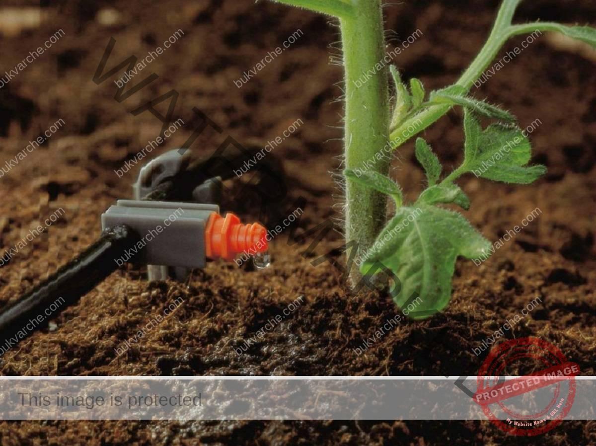 Усукване на доматените листа - причини и решение на проблема