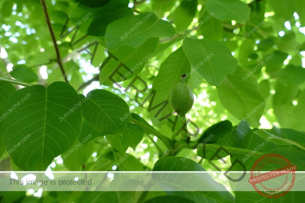 Средство срещу колорадския бръмбар, което ще защити реколтата ви