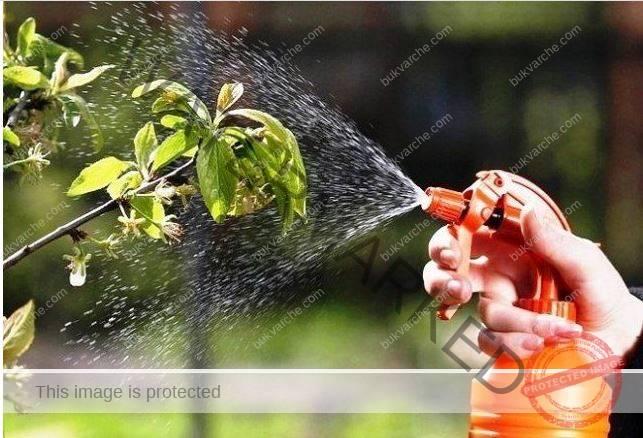 Дървесна пепел в градината - правилна употреба