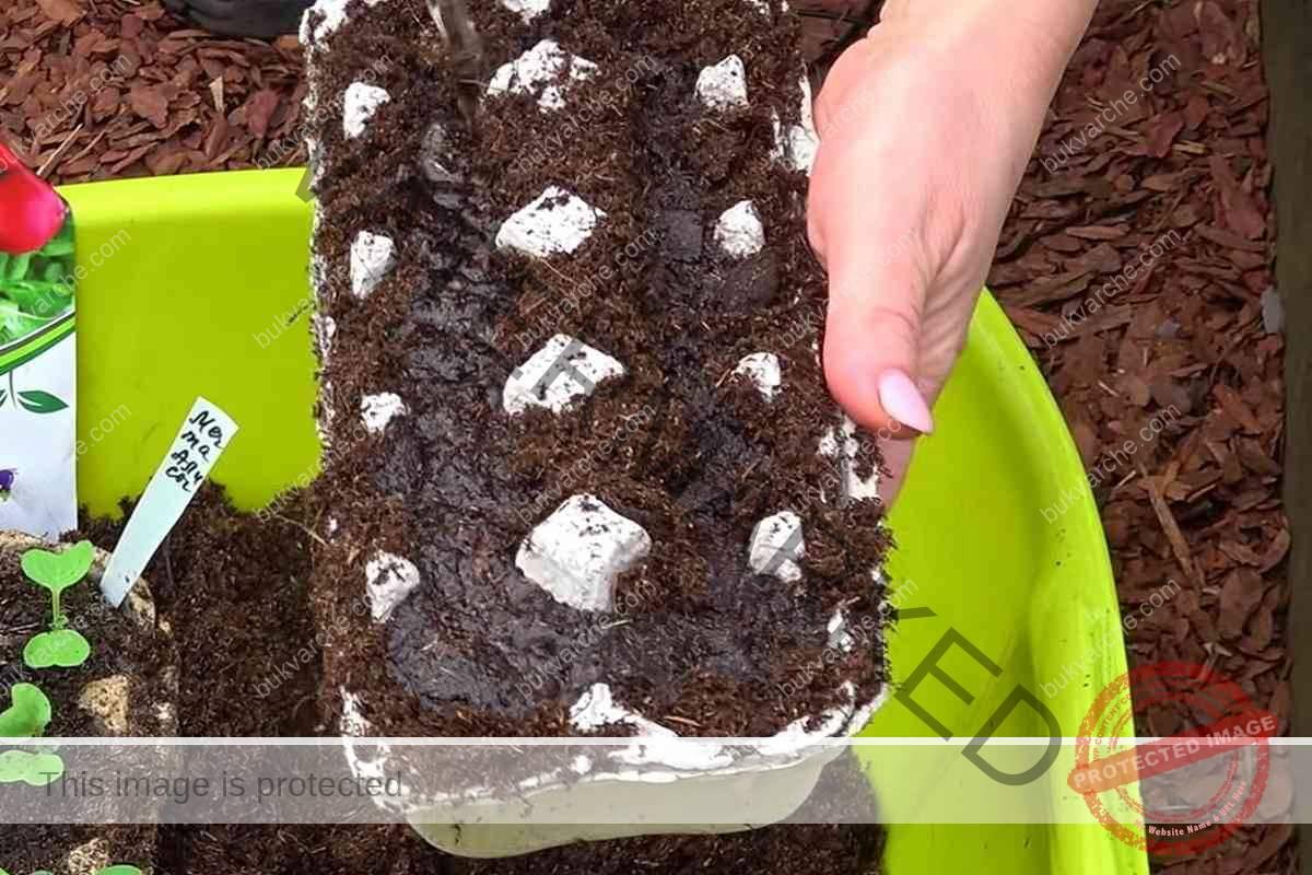 Репички в кори за яйца - ето какво са предимствата