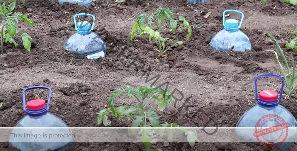 Капково напояване с пластмасови бутилки! Лесно и безплатно!