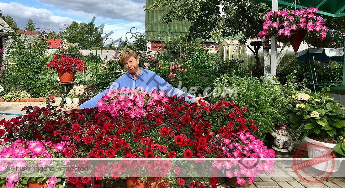 Градинските цветя ще цъфтят обилно благодарение на това