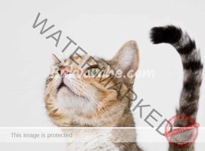 """Котките комуникират с нас: ето как да """"разчитате"""" техните знаци"""
