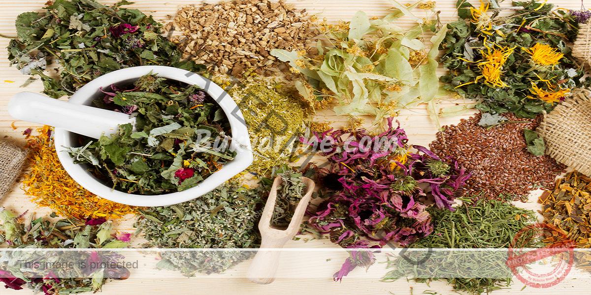 Лечебни свойства на билките и кога да ги използвате