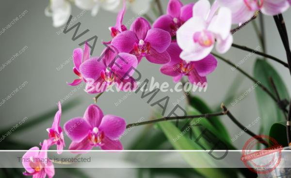 Основни грижи за орхидеята, за да цъфти обилно