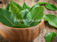 Талисман от дафинов лист, който ще ви пази от лоши очи