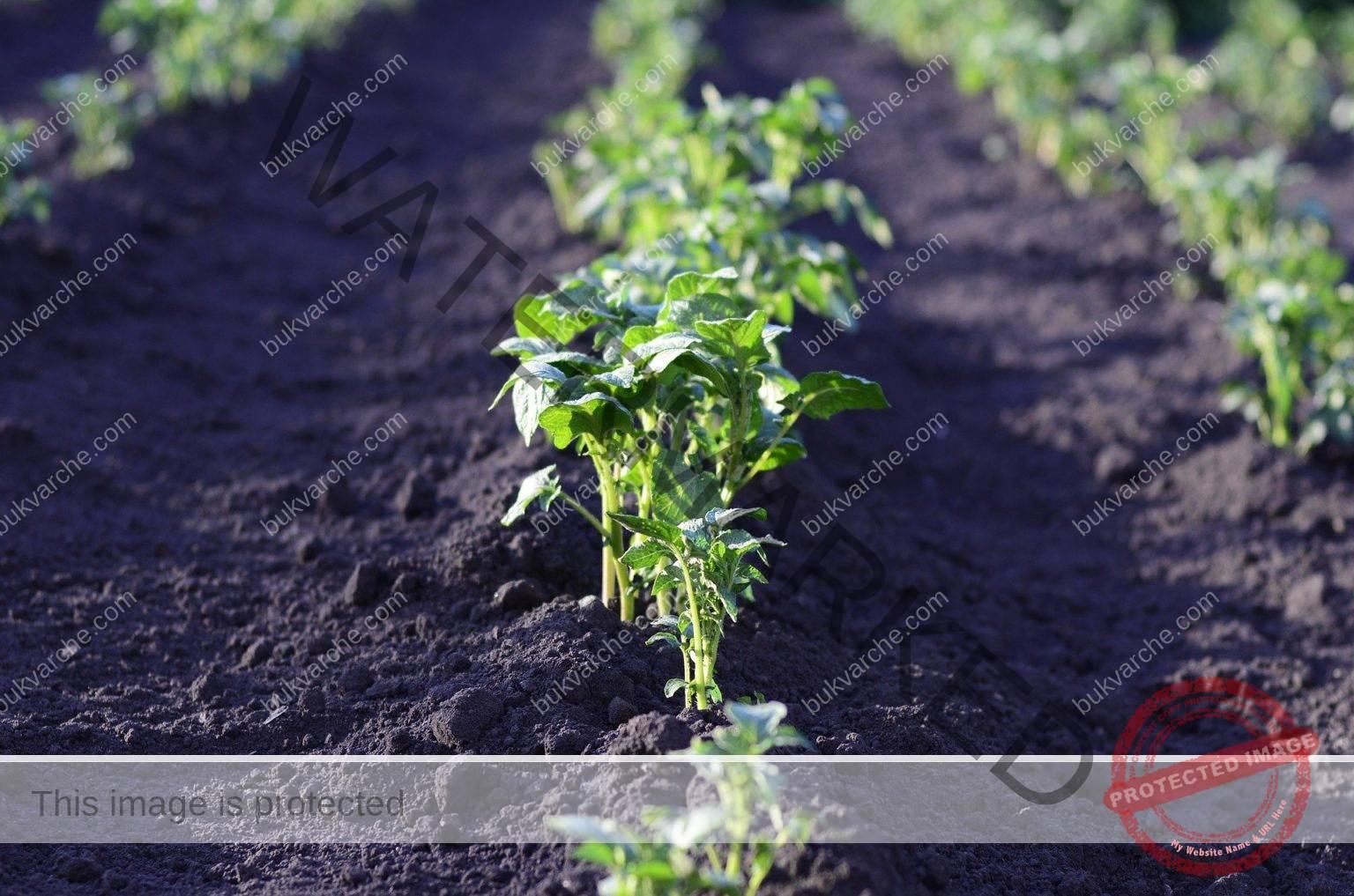 Съвети за градината, които ще ви помогнат да увеличите реколтата