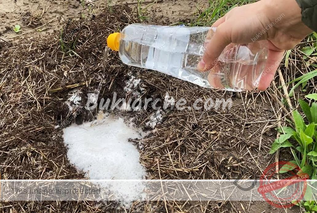 Естествено средство срещу мравки, което ще ги прогони от градината