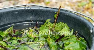 Естествен тор от коприва за подхранване на растенията в градината