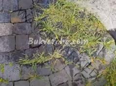 Как да унищожите плевелите? Рецепта за домашна смес