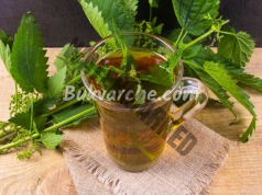 Лечебни свойства на копривата - пийте превантивно по 1 чаша чай!