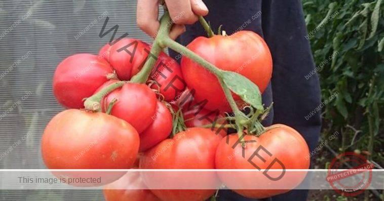По-сладки домати благодарение на този домашен тор