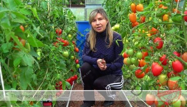 Домашен разтвор за зеленчуци, който им осигурява отлична защита