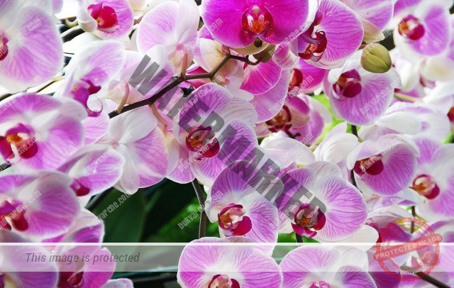 Идеалната температура за орхидеята според вида й