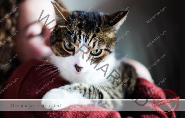 Котката почиства негативната енергия, натрупана в дома