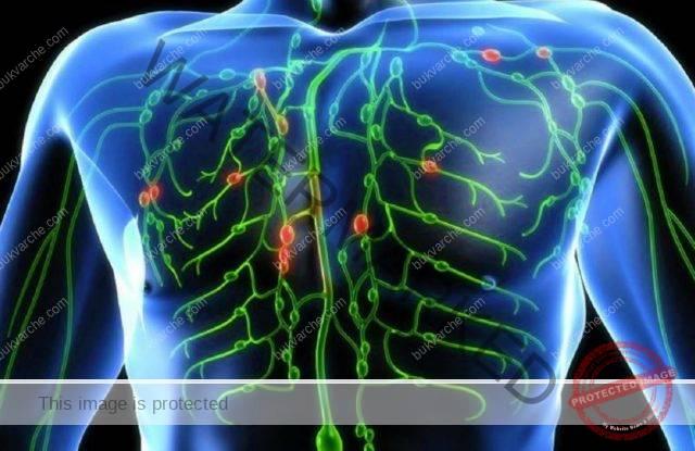 Почистване на лимфната система, за да бъдете здрави