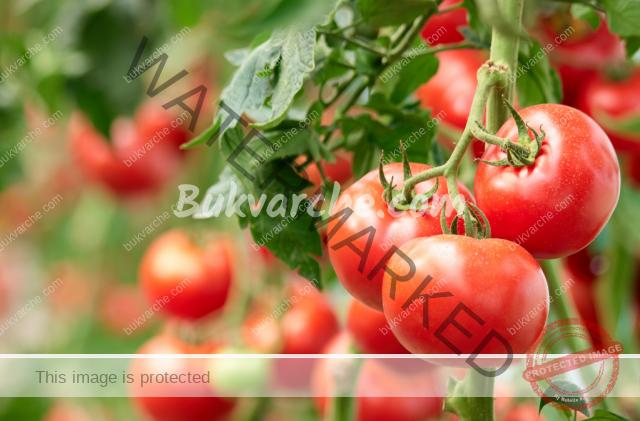 Разтвор за домати, който да си направите сами