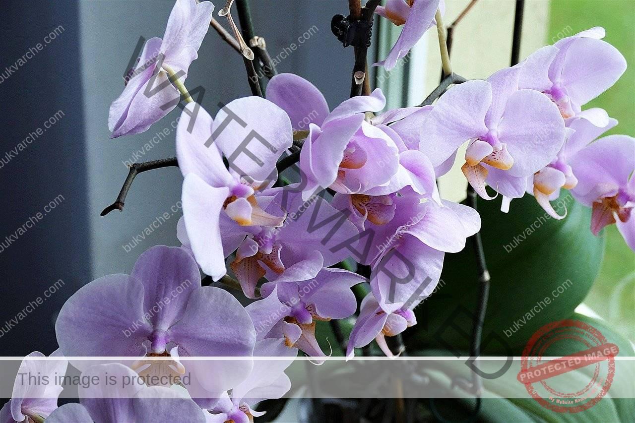 Полейте орхидеята с кафе и тя ще цъфне, както никога досега!