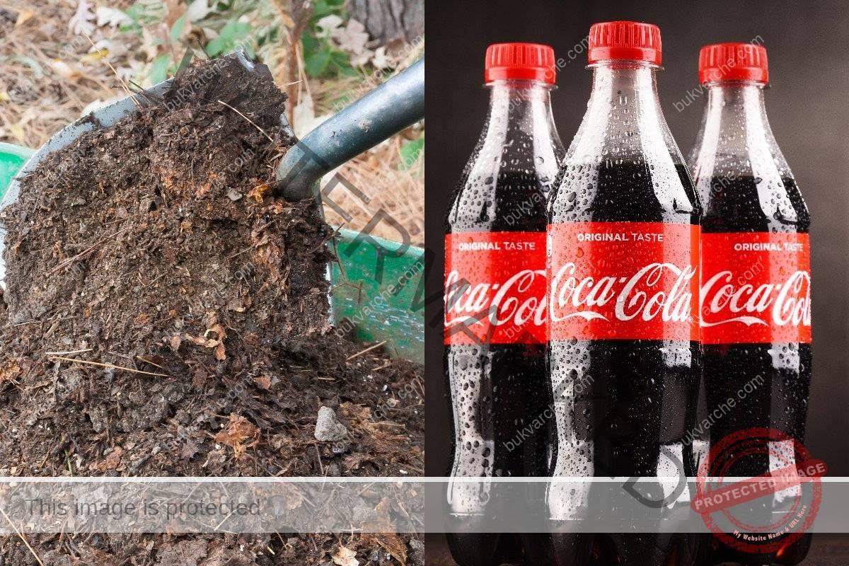 Кока-кола срещу вредителите по растенията в градината