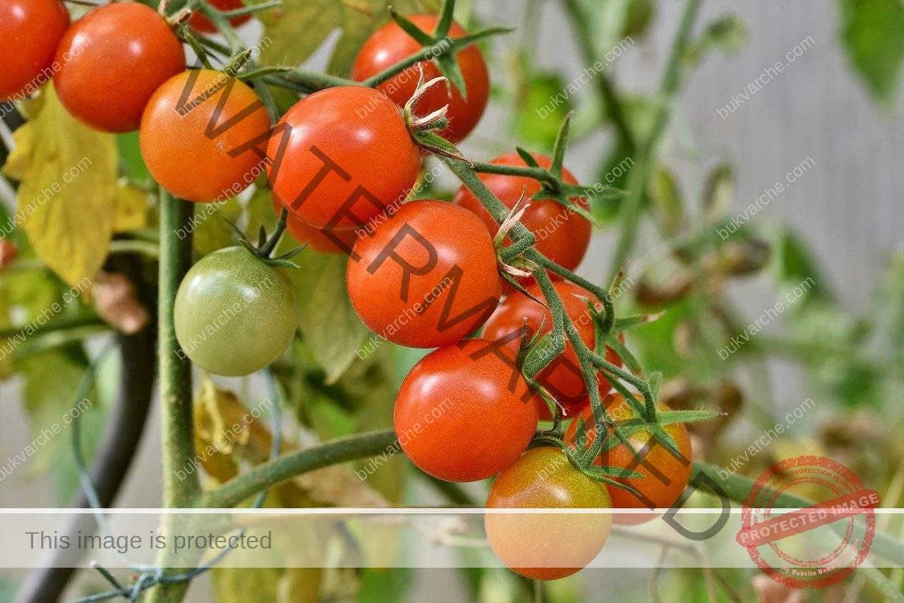 Захар в градината - подхранва растенията и гони вредителите