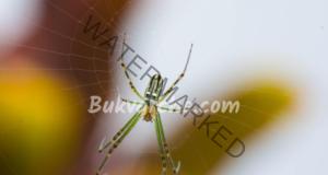 Домашните паяци предизвикват страх у много хора