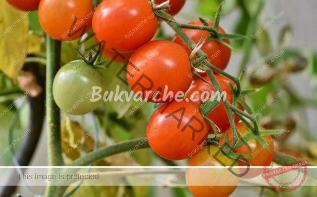 Подрязването на доматите има много предимства