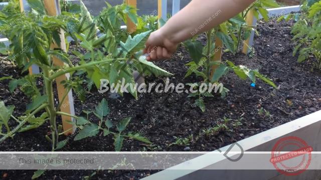 Подхранване с мая за богата и ранна реколта от зеленчуци