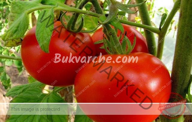 Торове за домати, които увеличават добива двойно