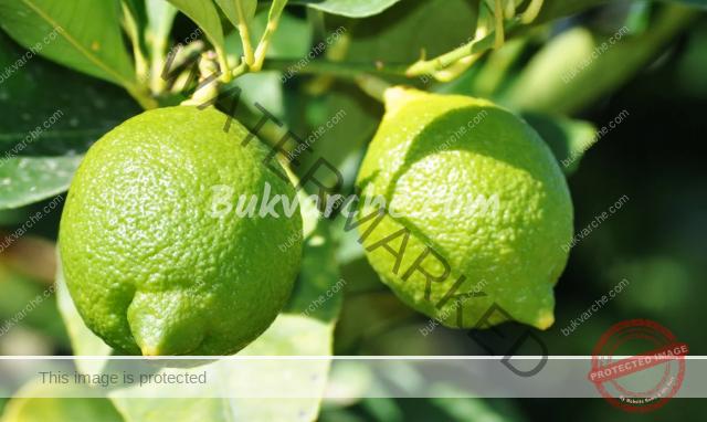 Магически свойства на лимона, за които трябва да знаете