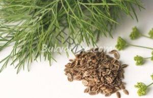 Чай от копър при анорексия, метеоризъм, болки в корема и запек